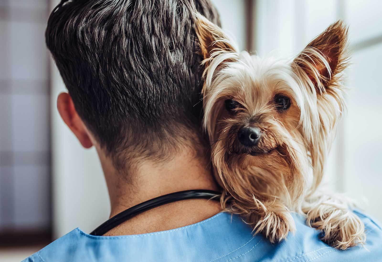 Checks For Healthy Pets