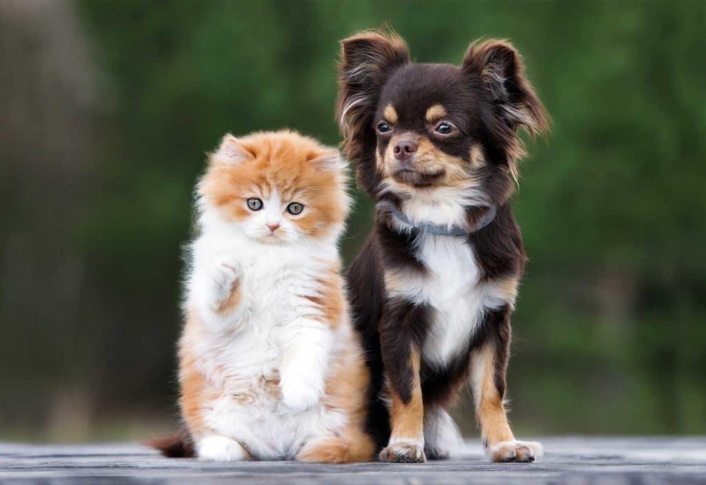 New puppy or kitten