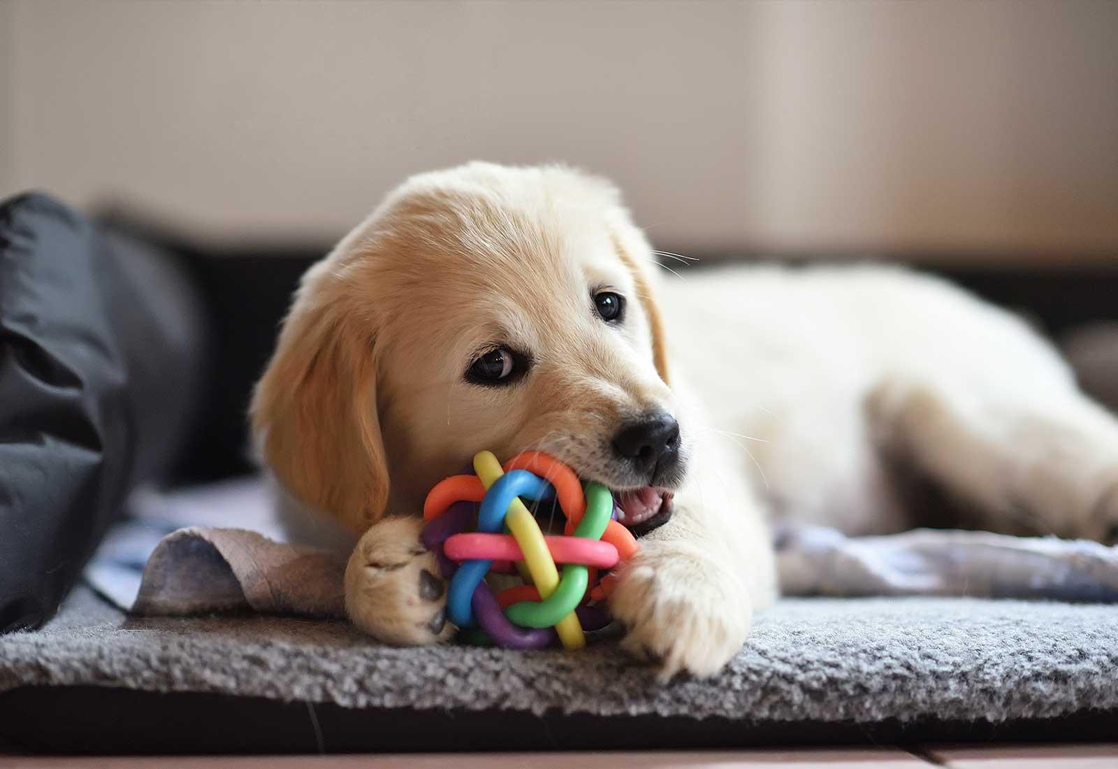 Preschool for pets