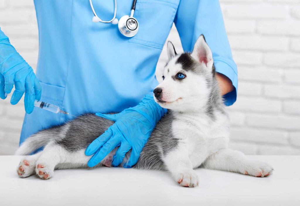 Vaccination for pets