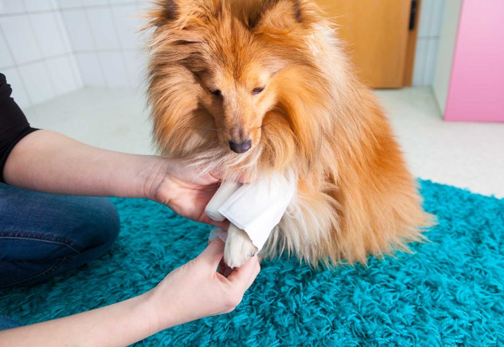 Orthopedic Treatment for pets